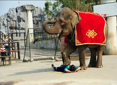 杭州野生动物园电话,地址