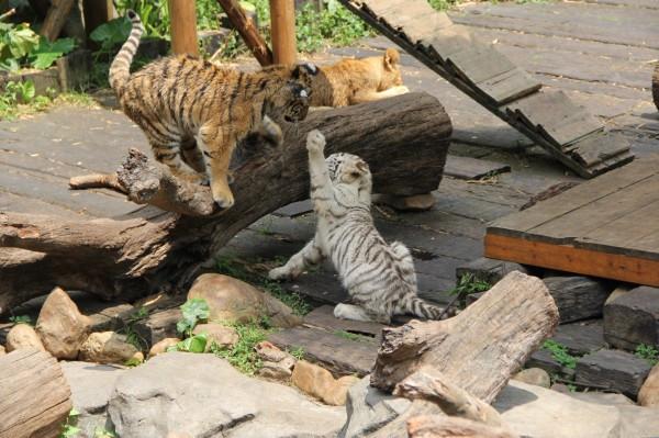 去长隆野生动物园,广州堵得要死千万不能开车