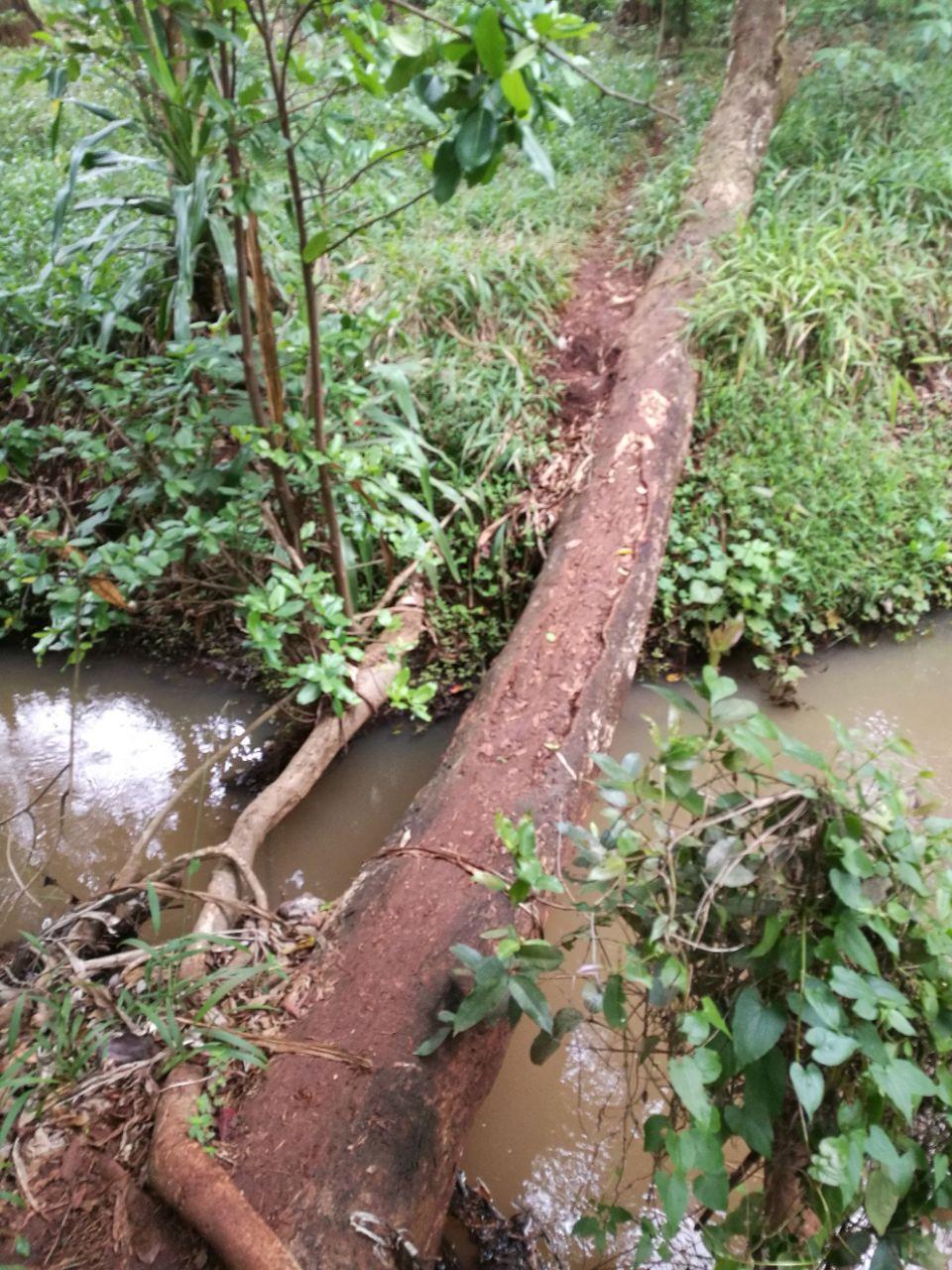 Karura Forest Reserve    -1