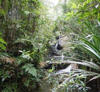 Cola-I-Suva森林公园  Cola-I-Suva Forest Park   -0