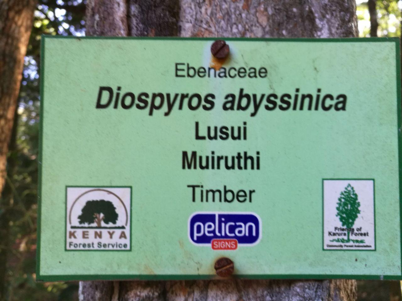 Karura Forest Reserve    -3
