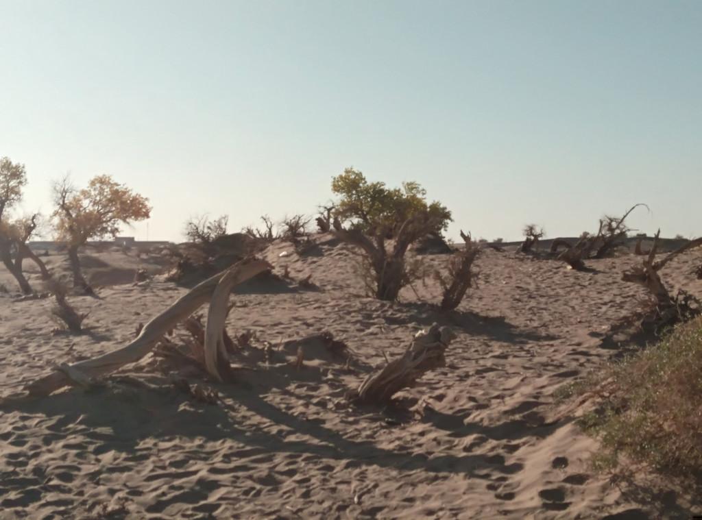 怪树林中奇异形,戈壁荒漠精神魂