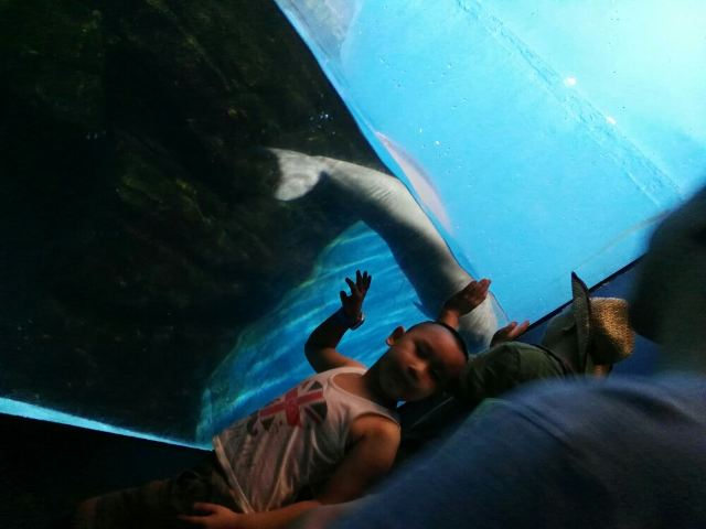 壁纸 动物 海底 海底世界 海洋馆 水族馆 鱼 鱼类 640_480