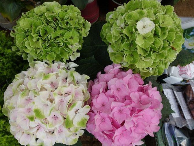 里面繁花似锦,其中一些热带花卉是我们平时不常见的