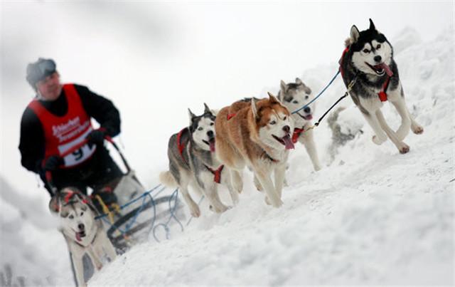 跟雪橇三傻一起去旅游!