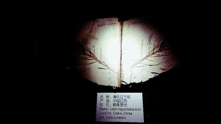 乐驼网-本溪~沈阳水洞~青山沟5天4晚自驾游-游戏十秒通关无人可过图片