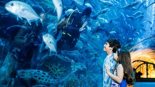 【携程攻略】迪拜迪拜水族馆与水下动物园研究员体验