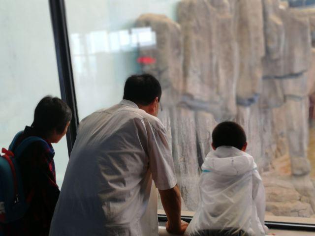 峨眉老人小孩海洋极地,极地,攻略喜欢公园馆的蜀门手游曲江法宝景点图片