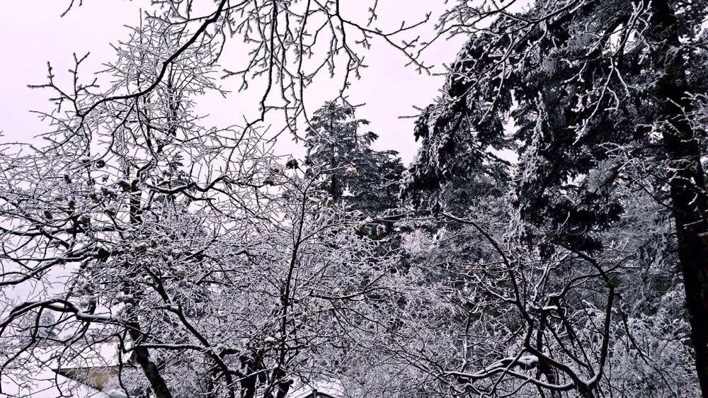 冬日四川精品线路跟团游(九寨沟,乐山峨眉山,都江堰青城山) 参团心得