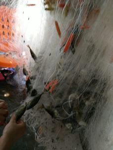 【携程攻略】儋州洋浦经济特区攻略,儋州洋浦巫师三3温暖希里图片图片