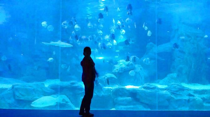 壁纸 海底 海底世界 海洋馆 水族馆 671_377