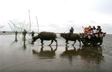 9-摄影家坐牛车[王必春摄]-海上迪斯科-如东-赖宝小乖