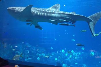 宝贝,我们看鱼去--横琴珠海海洋世界黄金游-珠wow挑战视频亲子攻略图片