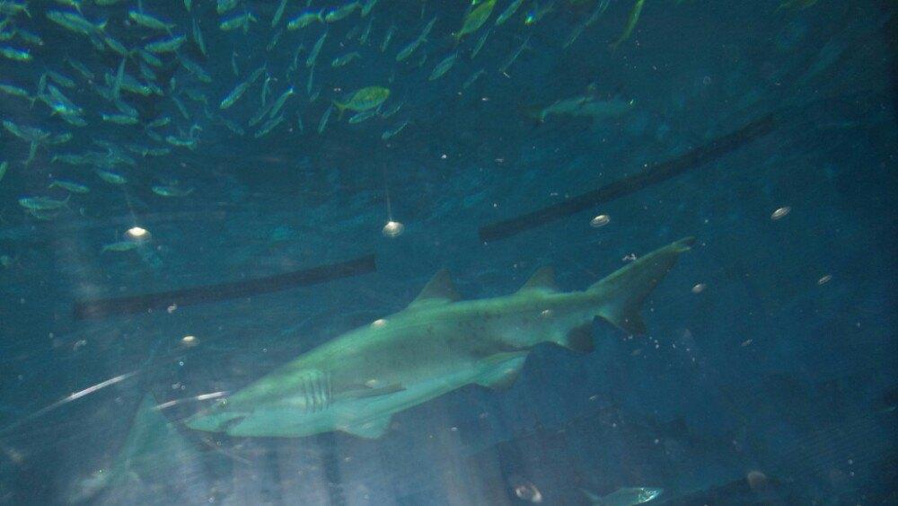 北京小朋友的天地:动物园 海洋馆