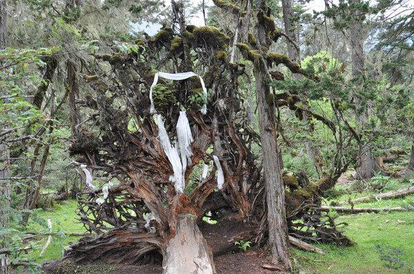 不知哪年连根拔起的树根,长满了绿苔,像小松鼠趴在树根上.