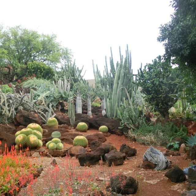 火山雨林大洋,每一天都是崭新的…青岛背包客夏威夷半月自由行(下)