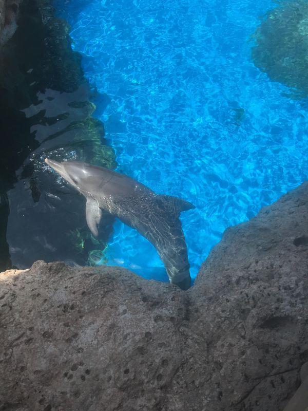 在海底餐厅用餐时,正赶上饲养员给鲸鲨喂食