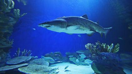 迪拜水族馆及水下动物园-3