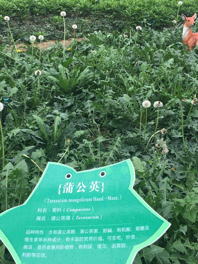 漳州东南巫师一日游郁金香展(厦门岛内出发自花都ro三任务攻略转图片