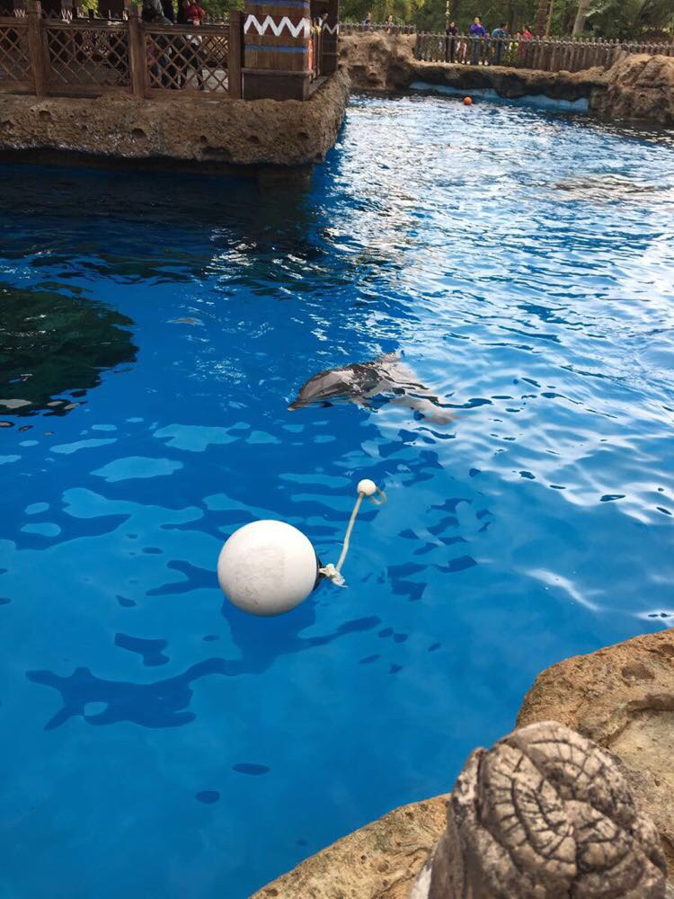 先看海豚,活泼可爱. 珠海长隆企鹅酒店
