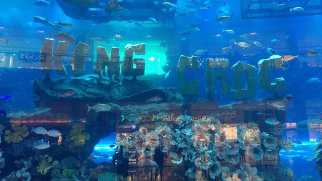迪拜水下动物园门票,迪拜迪拜水下动物园攻略/地址