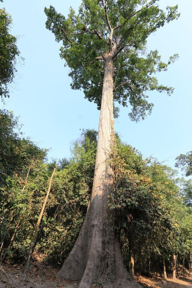 特别喜欢这里的参天大树.树干笔直挺拔,而树顶却又生意盎然,非常鲜活.