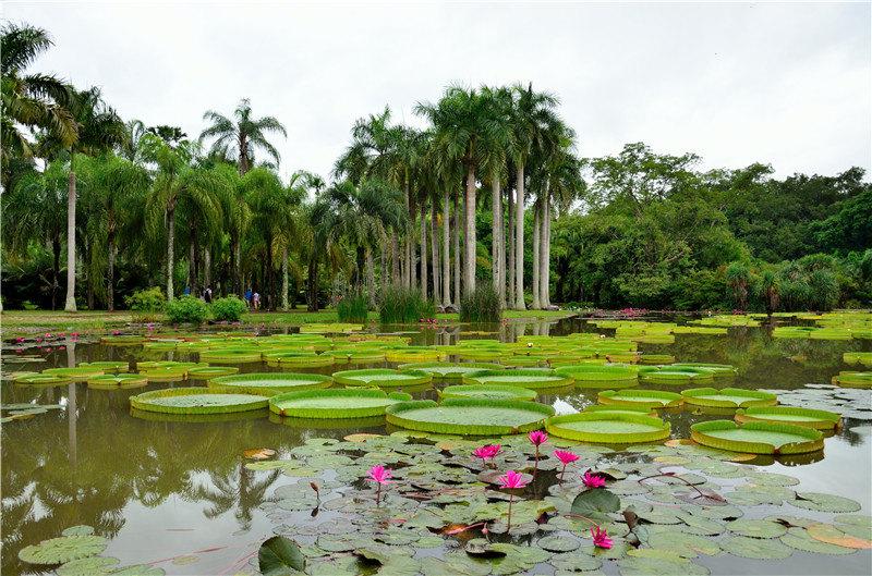 西双版纳+野象谷+原始森林公园+版纳热带植物园4日3晚