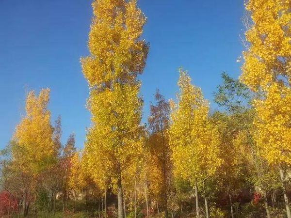 去北京旅游哪里好玩 秋天延庆有哪些好玩的地方,有什么美景