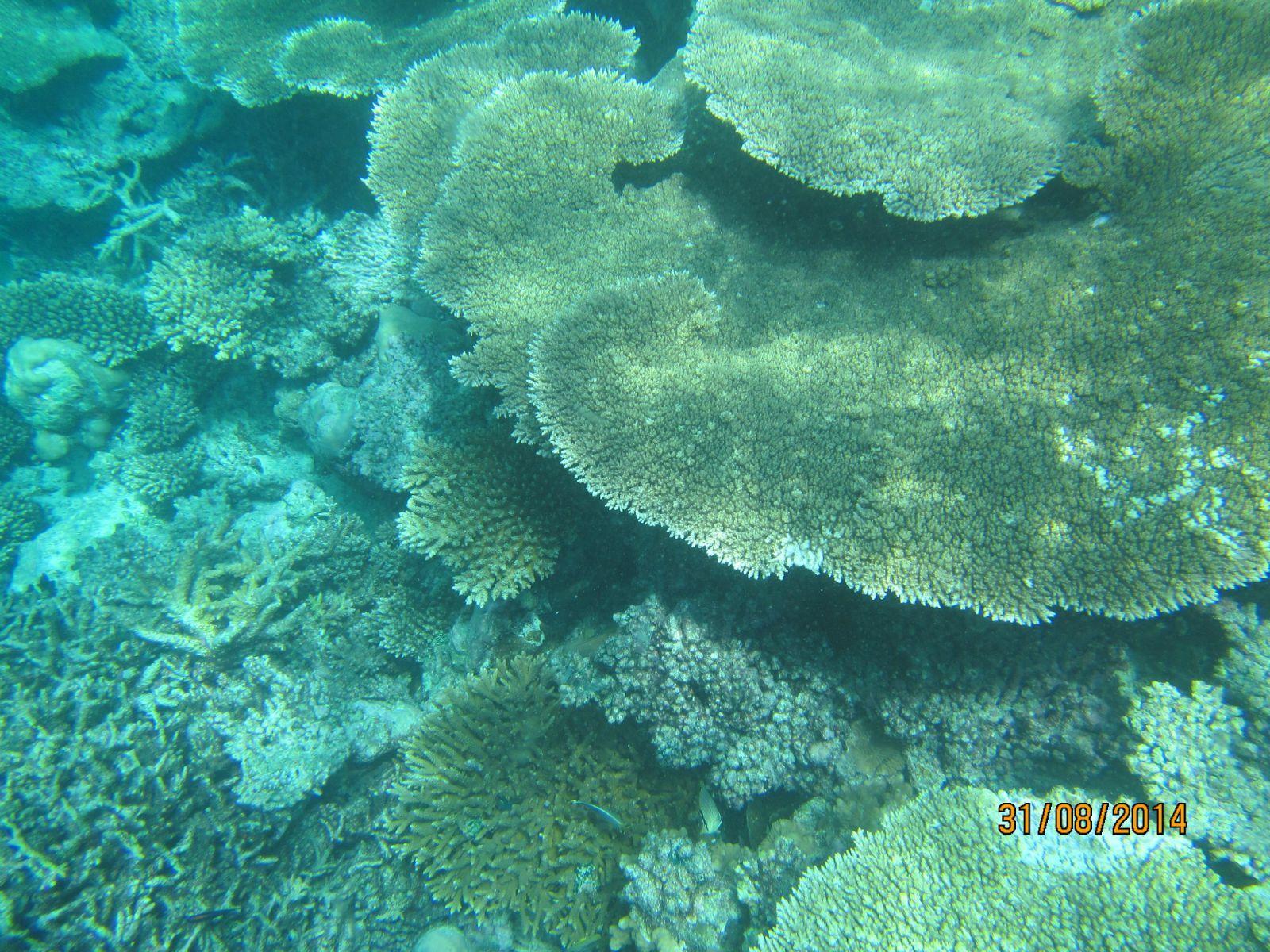 当然雨季的马尔代夫你也能看到清晰的海底世界,只是需要一点运气罢了