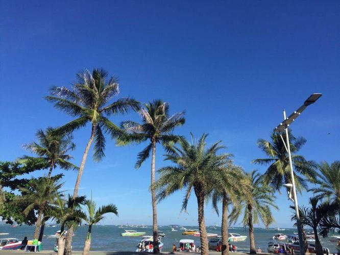 海岛椰风,早上