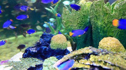 迪拜水下动物园门票,迪拜水下动物园门票价格