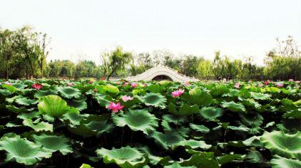 鹤苑—2014全国动物园展区规划设计示范展区