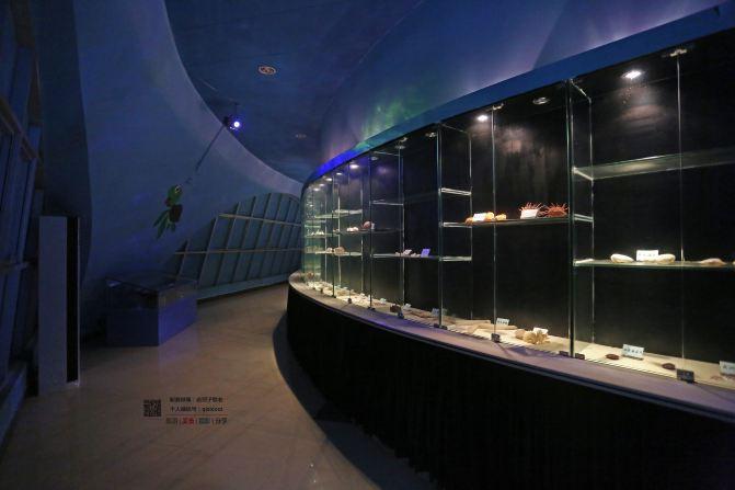 西沙群岛的海里的海生动物的简笔画和特点介绍