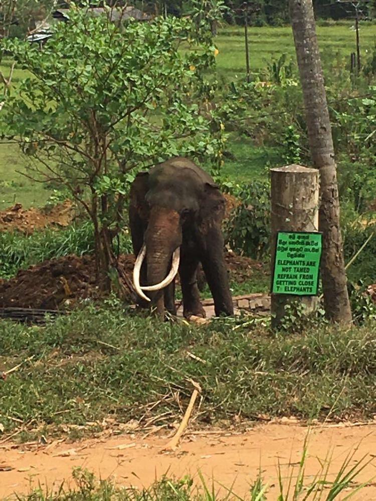 参观有近40年历史的世界上独一无二的大象孤儿院