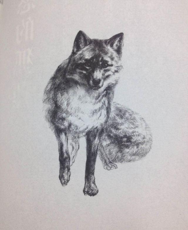 狐狸嘴巴学园of鲑鱼教育学院