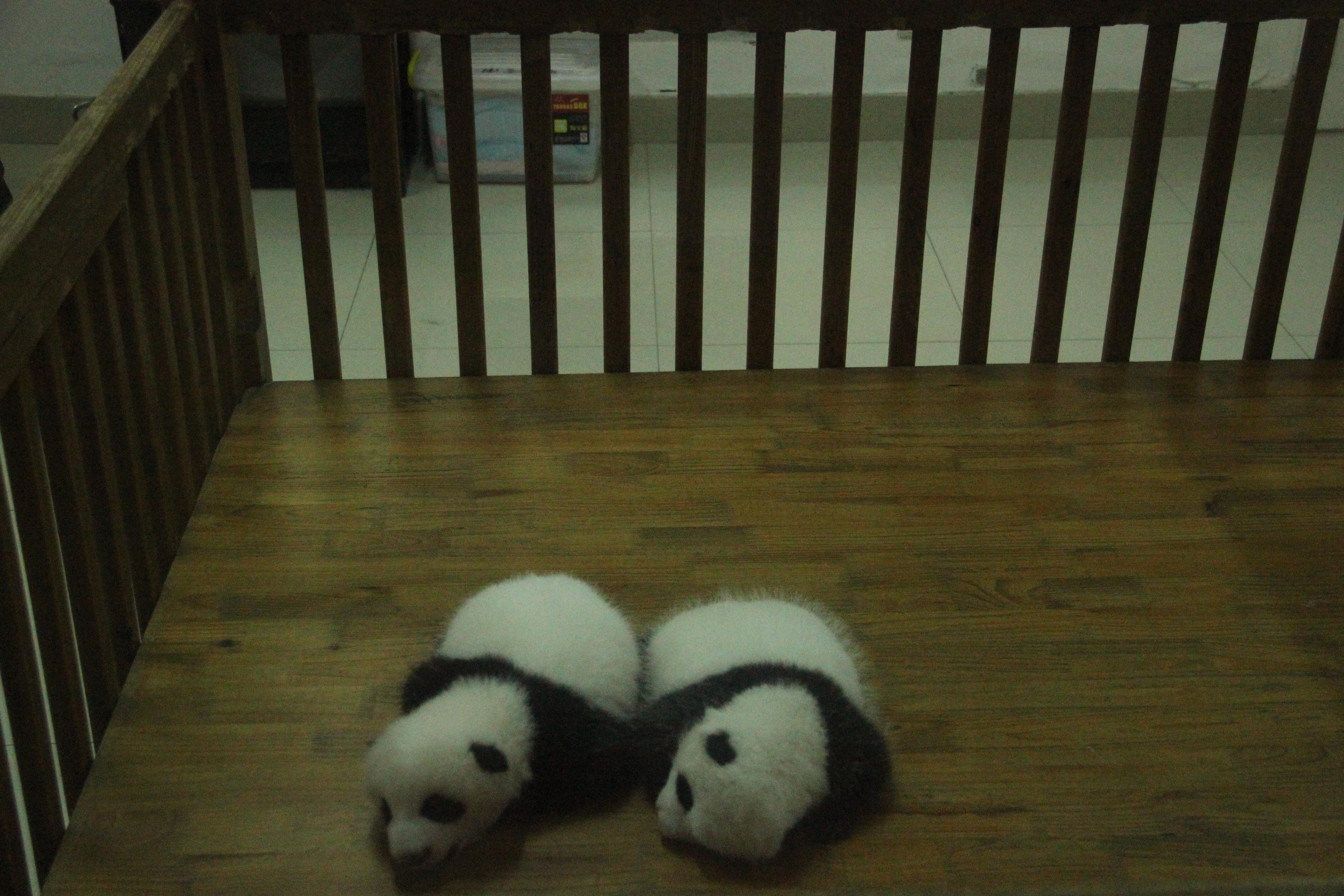 刚出生的熊猫宝宝,可爱的很!