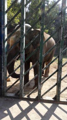 【携程攻略】南京红山森林动物园图片