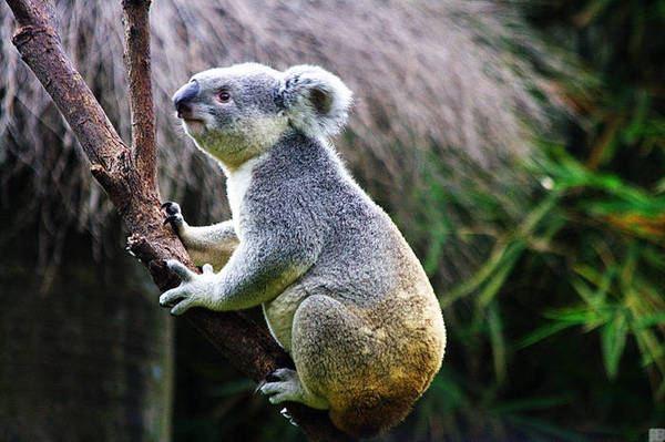 自然和谐,珍稀动物的天堂---长隆野生动物园