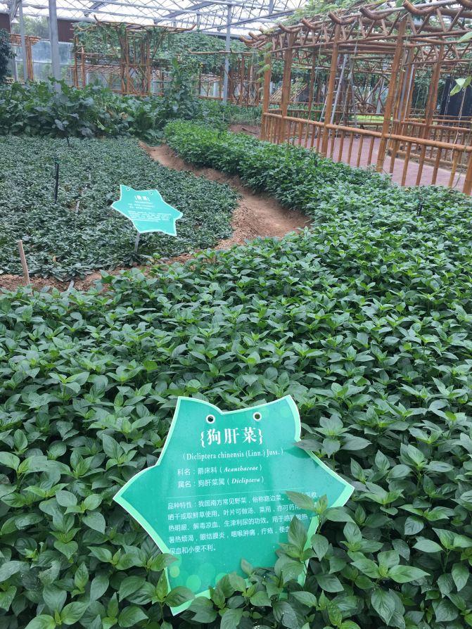 漳州东南花都一日游郁金香展(厦门岛内出发自上海东方绿洲攻略图片