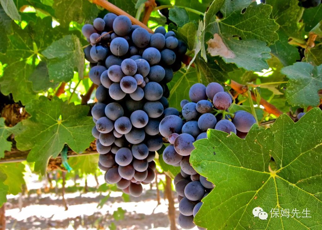 南非葡萄与葡萄酒文化游