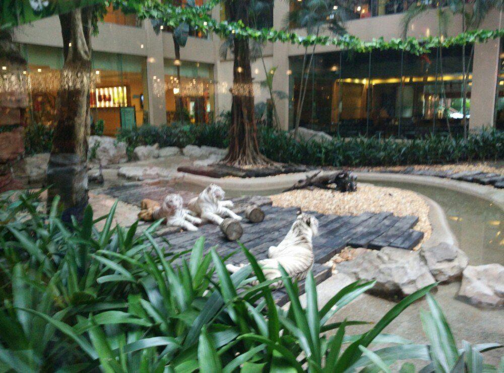 广州长隆野生动物园亲子游