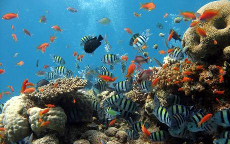 自然探索·马努干岛海底漫步游·海鲜自助烧烤午餐