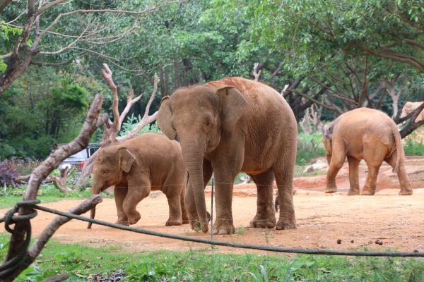 因为长隆野生动物园的表演时间大部分都在下午