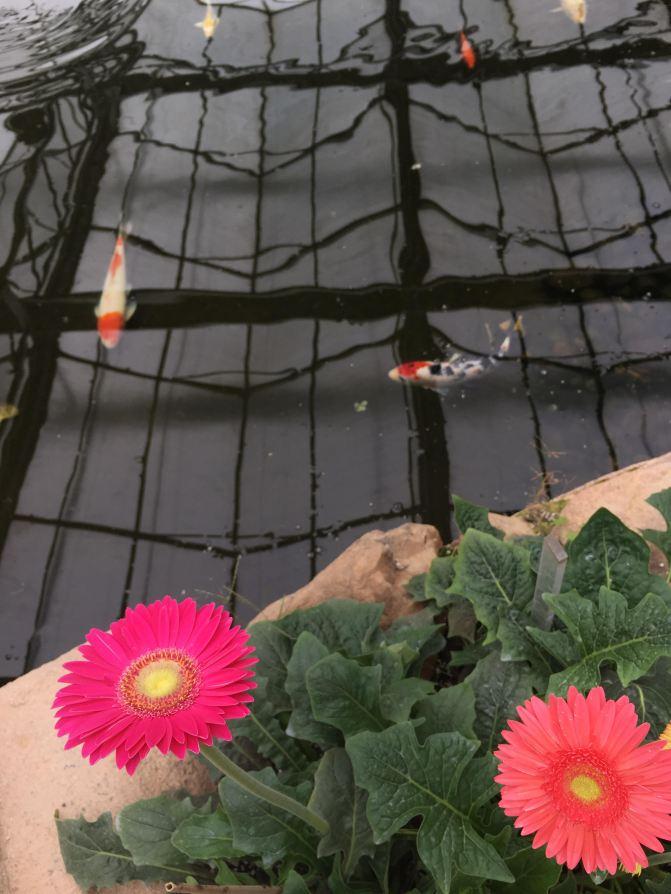 漳州东南剑士一日游郁金香展(厦门岛内出发自黑衣花都攻略图片