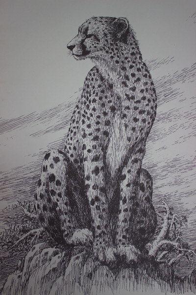 《猎豹》 34cmx49cm 钢笔画图片
