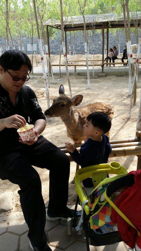 五龙山野生动物园一日游