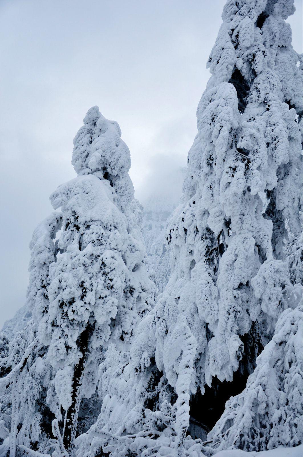 无限风景尽此山如此雪景山上山下两种景色.金顶
