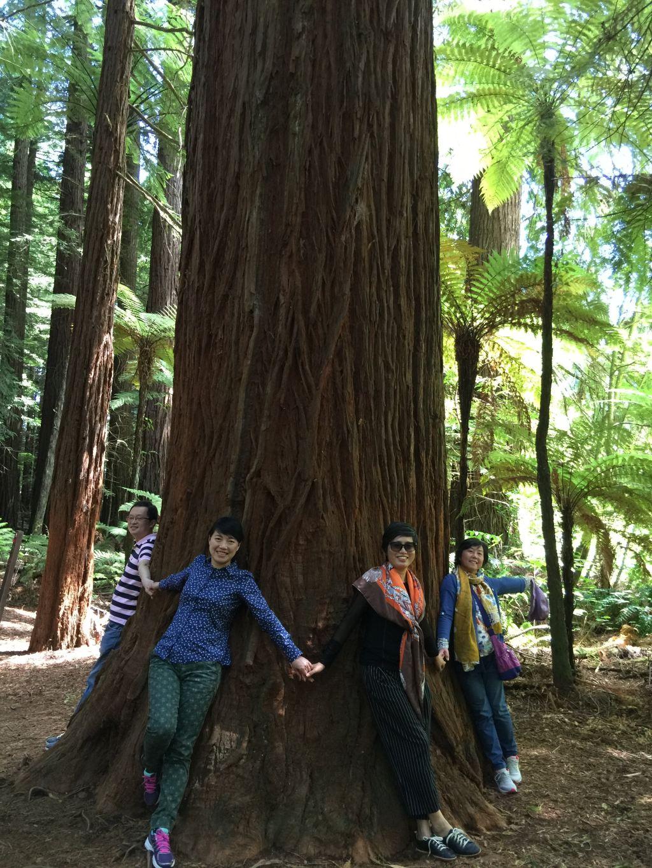 最大的这棵树是红松
