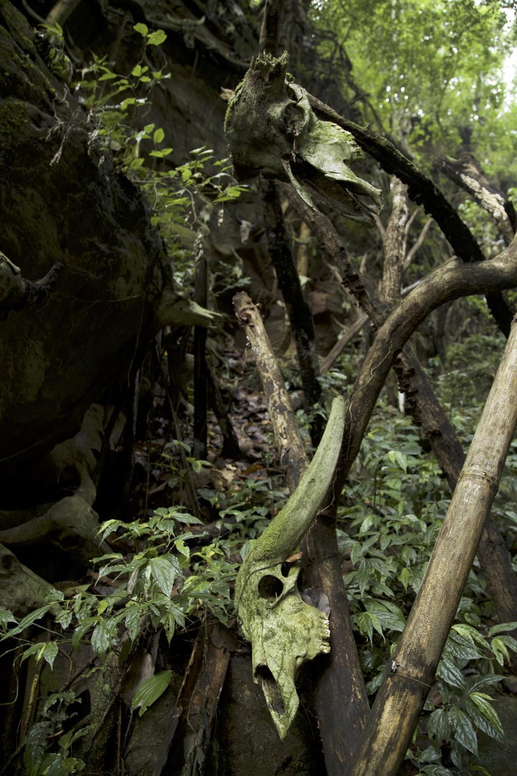 古老部落神秘佤族的黑暗森林的人头祭祀