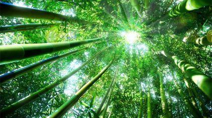竹洞天风景区门票,竹洞天风景区门票价格